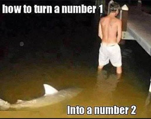Shark Knows How to Turn a Number 1 Into a Number 2