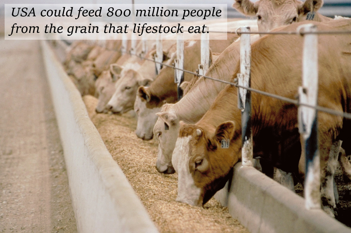 We feed farm animals for than we do humans